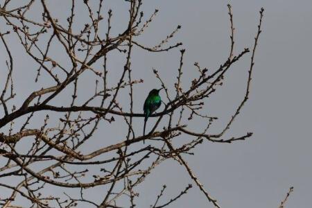 laughing-waters-farm-bird-watching