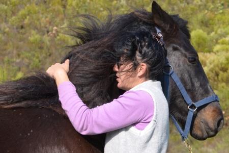 laughing-waters-farm-horse-coaching